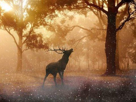 Олень в лесу фото