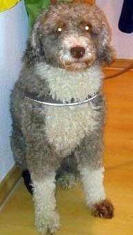 Немец выдавал своего пса за овцу, чтобы не платить налоги