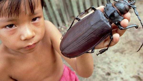 Самые красивые жуки (большие)