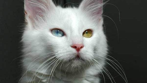 Кошачьи глаза фото