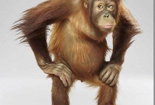 Jill Greenberg. Забавные обезьяны фото