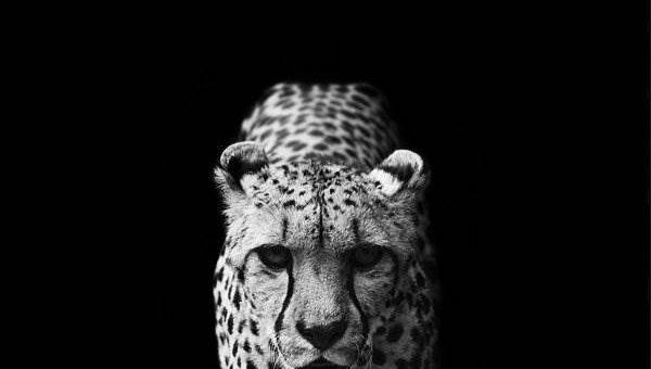 Чёрно-белое фото животных от Nicolas Evariste