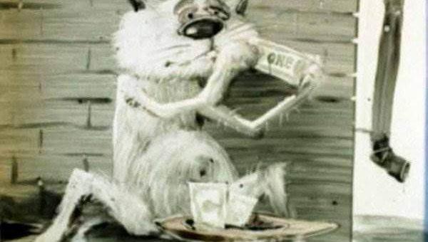 Анатолий Ярышкин рисунки котов