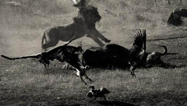 Дикая природа Зимбабве. Fred Relaix