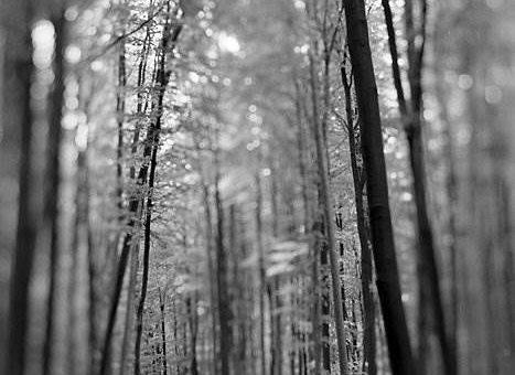Kaspar Hauser чёрно-белая природа