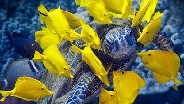 Mike Roberts фото подводного мира