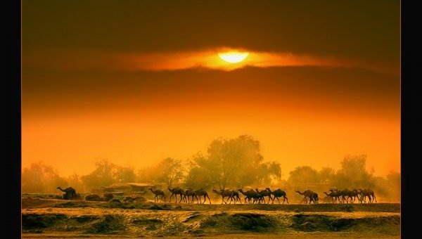 Природа фотографа Razaq Vance