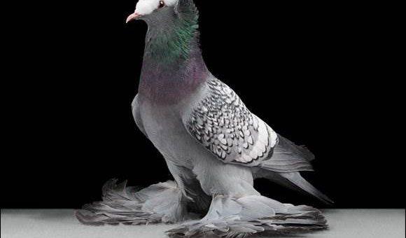 Голуби на фотосессии Tobias Kresse