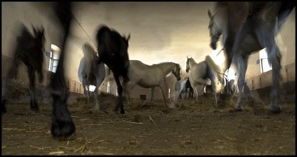 Лошади и все, все, все от Milan Malovrh