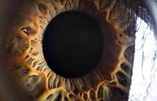 Макрофото глаза