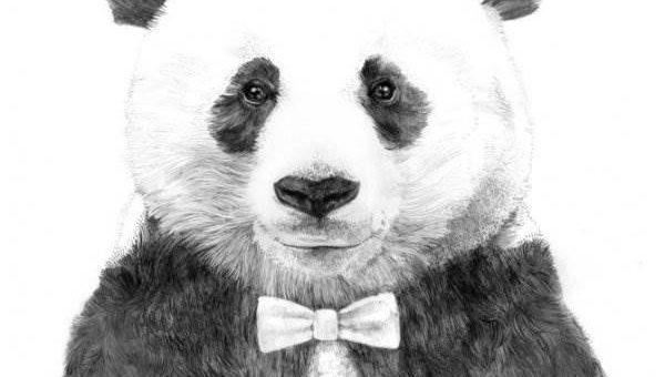 Рисунки животных Jamie Mitchell