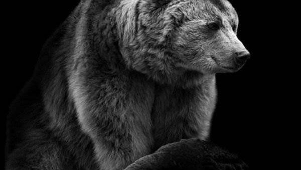 Выразительные животные Wolf Ademeit