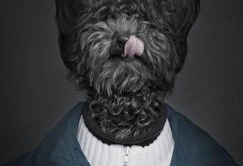 Животные в роли людей. Фотограф Sebastian Magnani