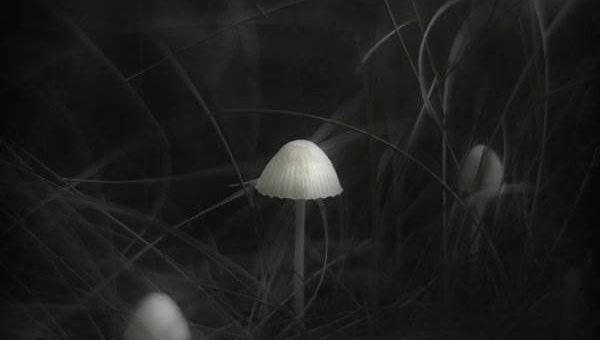 Грибы фото Jurgen Heckel