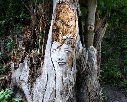 Лица деревьев. The Tree Project... Zonenkinder