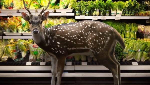 Фотограф Agan Harahap - Животные в супермаркете