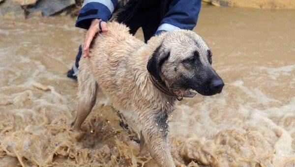 Наводнение в Турции (12 фото)