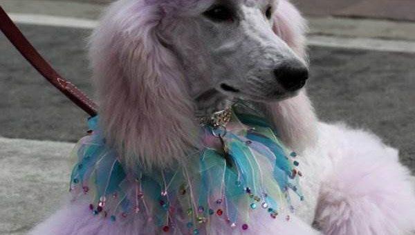 Woofstock собачий фестиваль фото