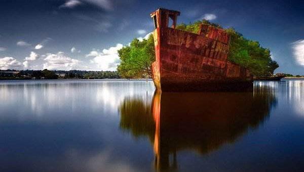 Корабль-Лес SS Ayrfield (9 фото)