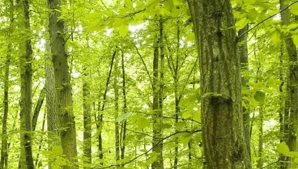 Walter Schiesswohl фотограф. В лесу