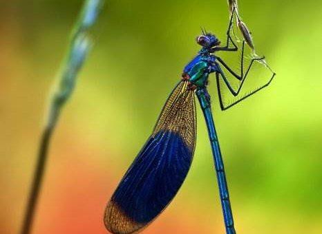 Макро насекомые от Ondrej Pakans