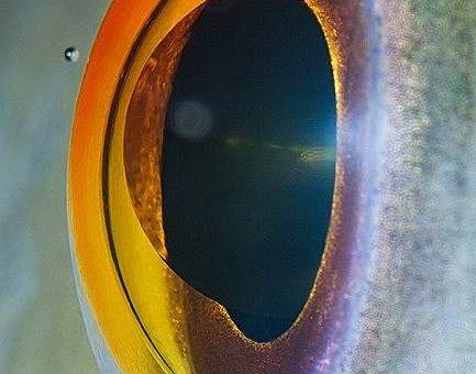 Глаза животных макрофото