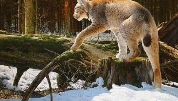 Сергей Трухан художник. Пейзажи и животные