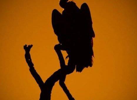 Живописный закат в саванне фотографа Mario Moreno