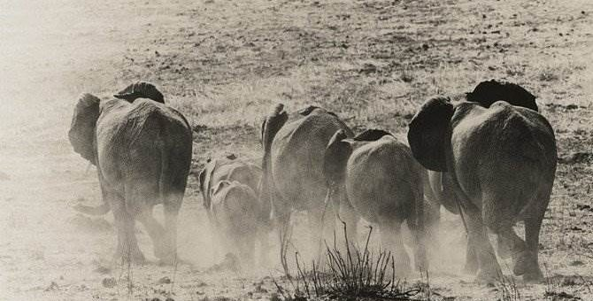 Природа Танзании. Фотограф Aernout Overbeeke