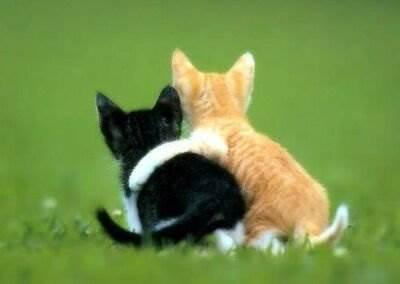 Дружба и взаимопонимание