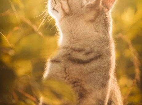 Фотограф кошек Seiji Mamiya