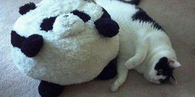 Толстые коты фото