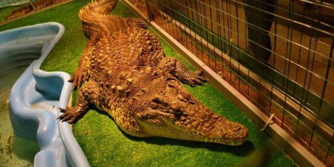 Крокодиловая ферма в Санкт-Петербурге (21 фото)