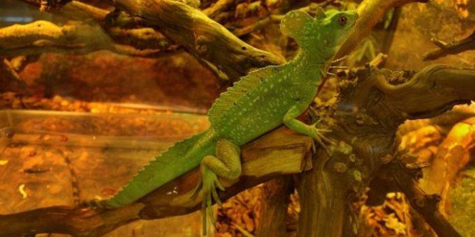 «Жизнь с холодной кровью» выставка экзотических животных, СПб