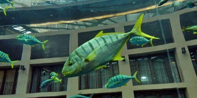Аквариум Aquadom в отеле Radisson Blu