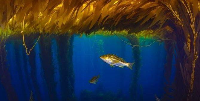 Подводный фотограф Octavio Aburto