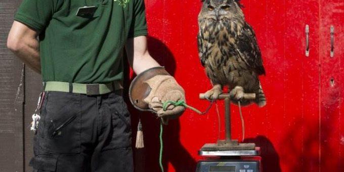 Взвешивание животных в Лондонском зоопарке