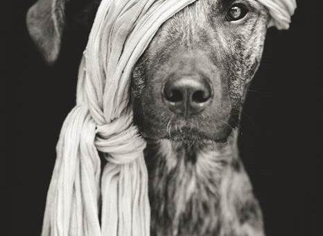 Смешные портреты собак, фотограф Elke Vogelsang