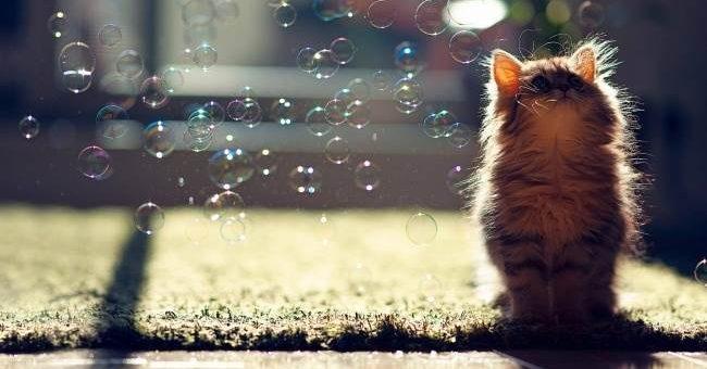 Кошки и мыльные пузыри