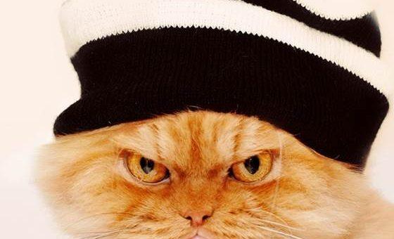 Злой кот Гарфи, фотограф Hulya Ozkok