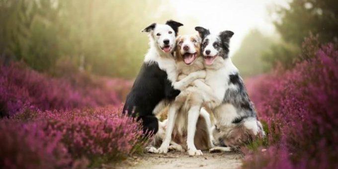 Алисия Змысловска, самые красивые фотографии собак