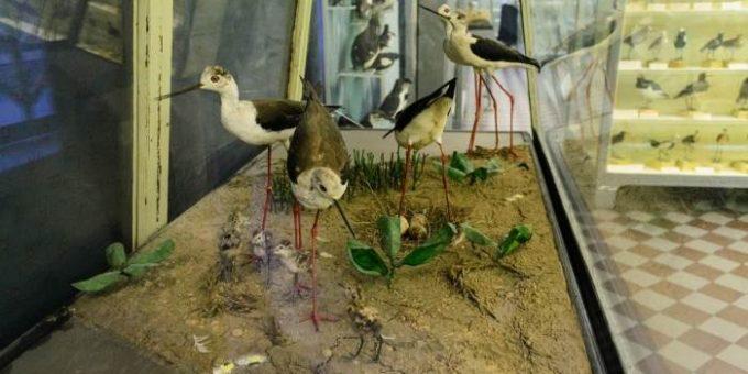 Зоологический музей в Петербурге (18 фото, часть 2)