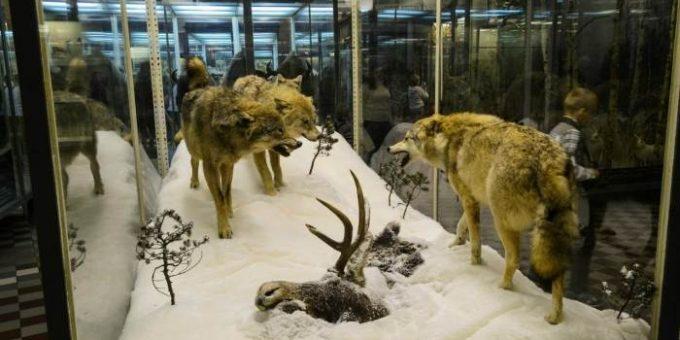 Зоологический музей СПб (16 фото, часть 3)