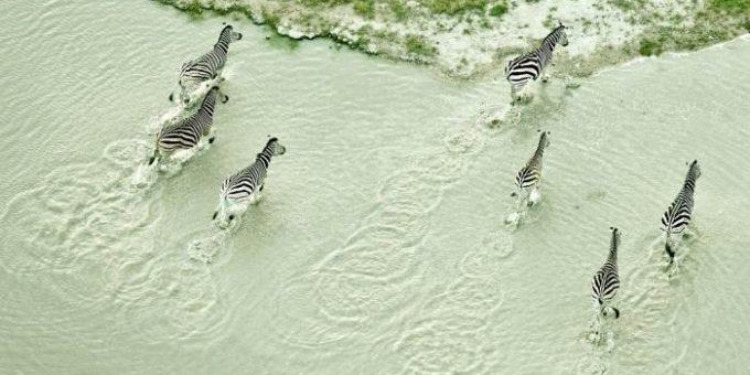 Зак Секлер - Ботсвана с высоты птичьего полёта