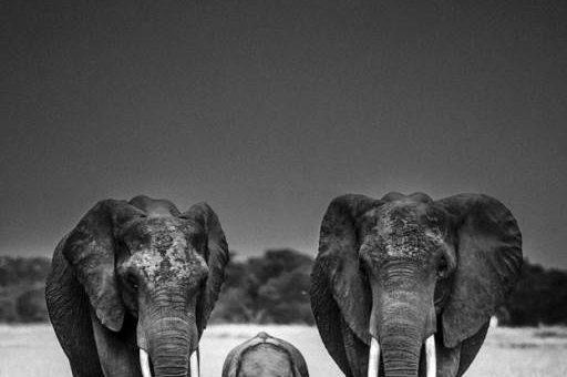 Фотограф животных Laurent Baheux
