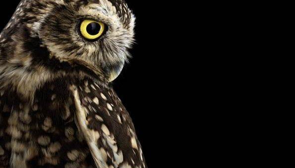 Фотограф Brad Wilson портреты птиц