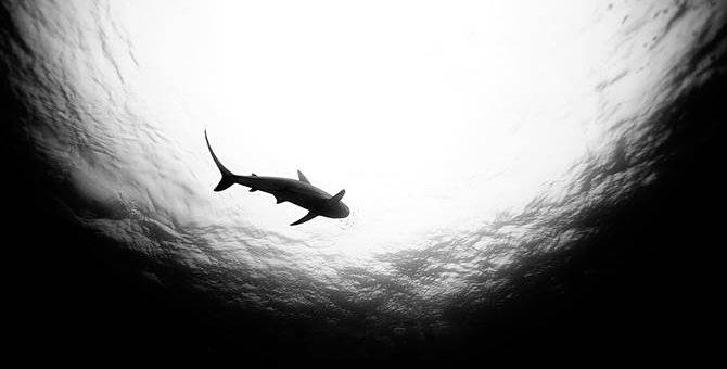 Фотограф Jorge Cervera Hauser - Акулы
