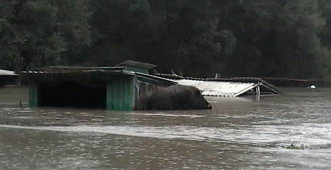 Зоопарк в Уссурийске затоплен после тайфуна «Гони» фото и видео