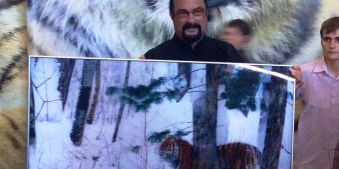 Памела Андерсон и Стивен Сигал приедут в Приморье на День тигра