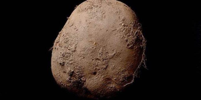 Фотография картошки за миллион долларов